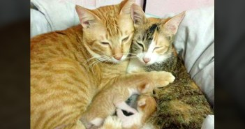 父猫と母猫