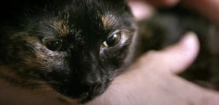 猫とガンの少女