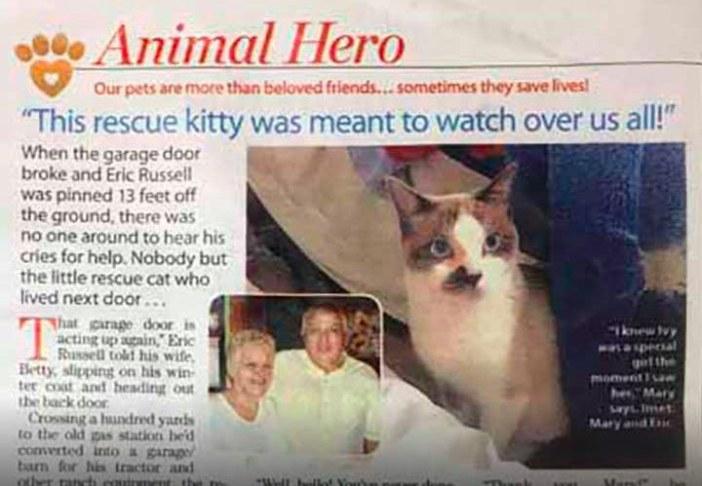 ニュースになった猫