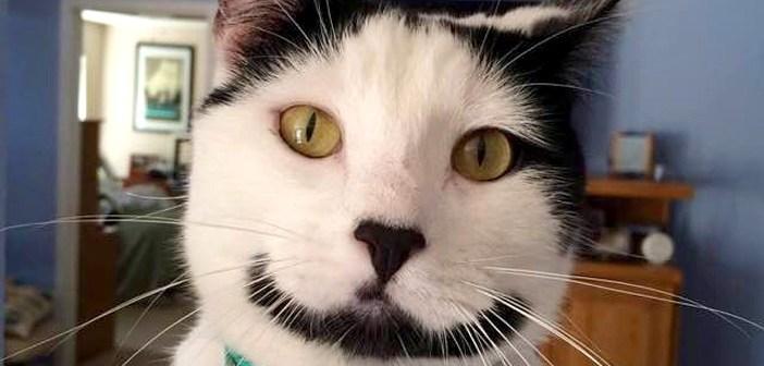 笑顔のヒゲ猫