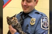 警察官と猫