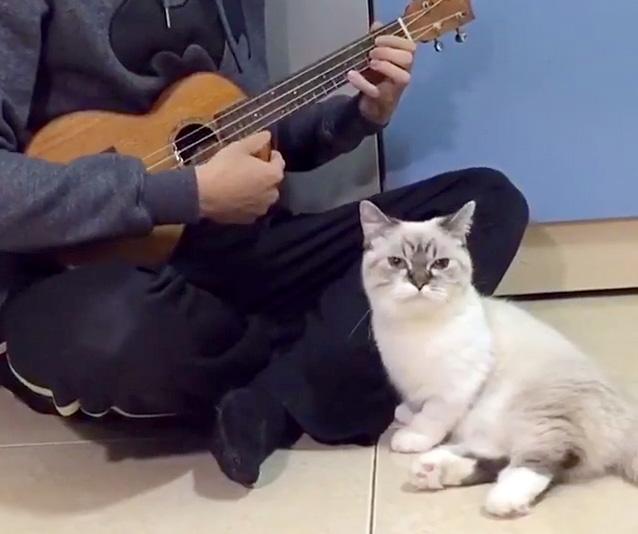 ウクレレの演奏に聞き入る猫