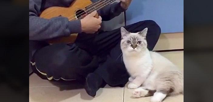 ウクレレ猫