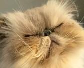 長い間、引き取り手が現れなかった臆病な老猫。ついに運命の人が現れると… まるで別猫へと大変身! (4枚)