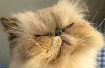 気難しそうな猫