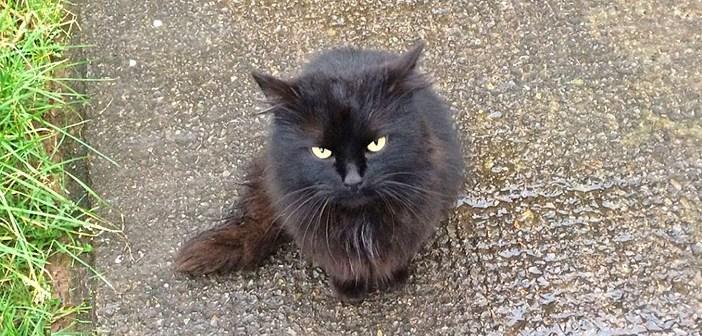 「私を助けて…」路上に置き去りにされ、寂しそうに鳴いていた猫。優しい夫婦に助けられ、愛のある生活を取り戻す (7枚)