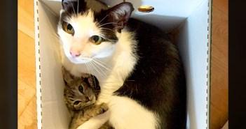 子猫とお父さん