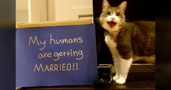 幼い頃に1人の女性に救われた猫。飼い主さんの特別な日に、素敵な恩返しをしてくれた (*´ω`*)♪ 6枚