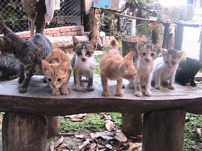 男性を待つ猫達
