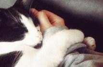 手に捕まる猫
