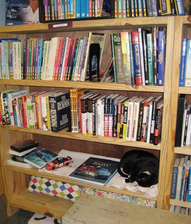 本棚の中の猫