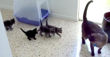 子猫達を見る猫