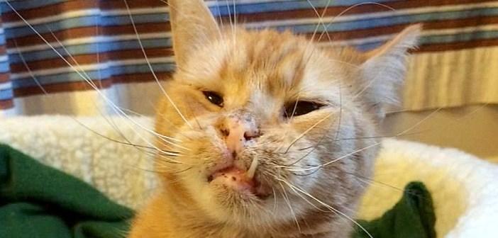 醜いと言われた猫