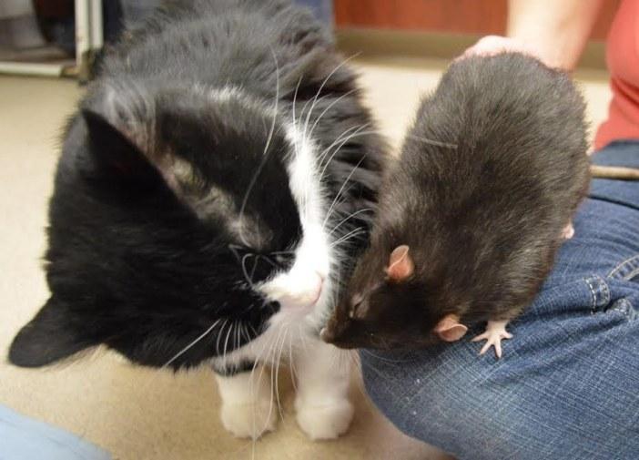 猫とネズミは仲良し