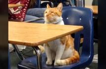 学校で学ぶ猫
