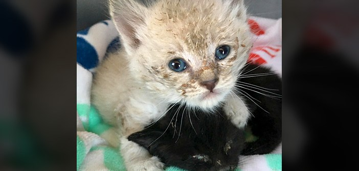 衰弱し、小屋の後ろで助けを求めていた2匹の子猫。人間の愛情で、みるみる元気になっていく姿に胸が熱くなる (6枚)