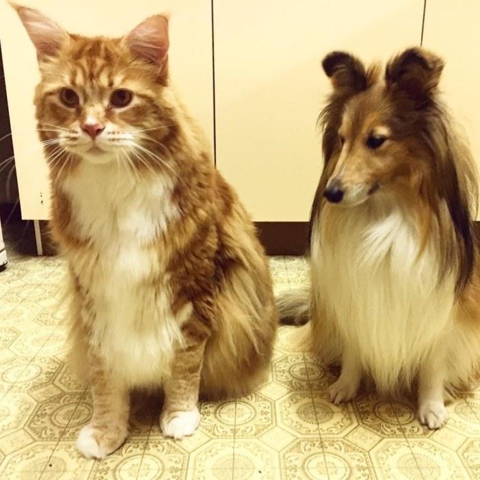 大きな猫と犬
