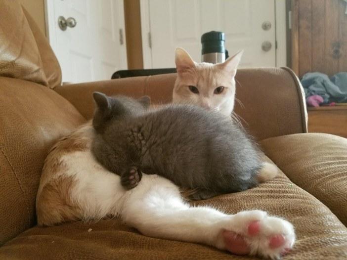 まったりする子猫と猫