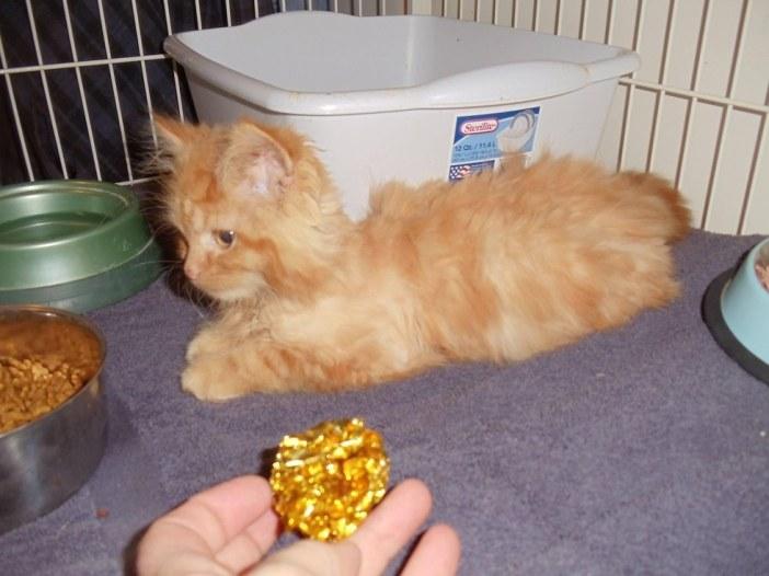 毛を刈られた子猫