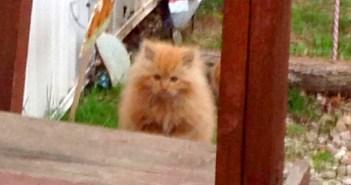 庭に現れた子猫