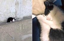 高速道路の子猫