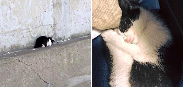 子猫を救出するために保健所に向かっていた女性。高速道路を移動中に、別の子猫も助け出す! (8枚)