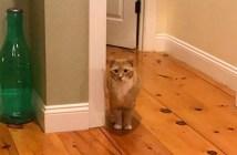 じっと見つめてくる猫