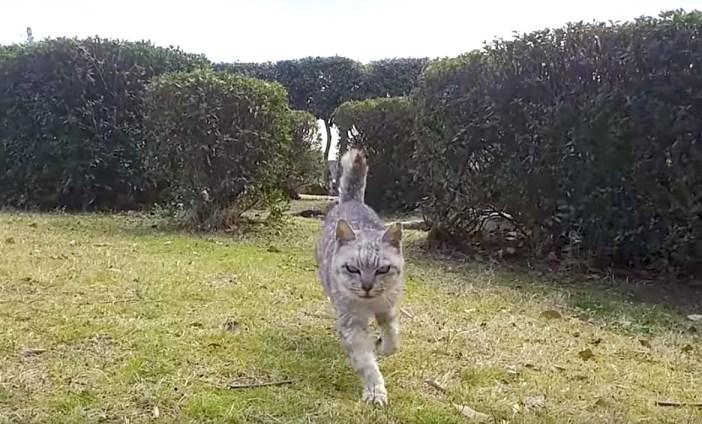 走って来た猫
