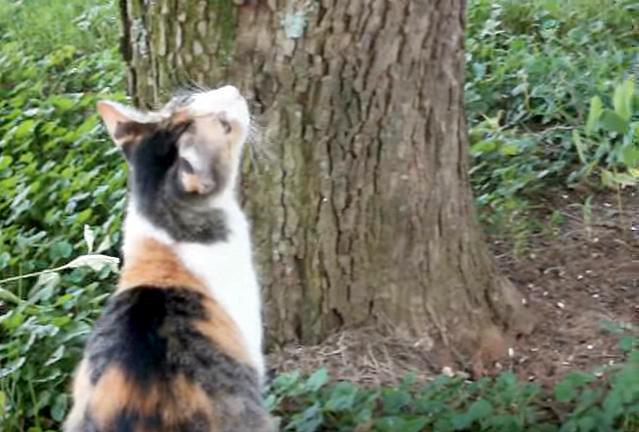 子猫を見上げる母猫