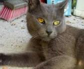 庭に現れた猫と仲良くなった夫婦。ある日、猫に誘われるまま後をついて行くと… そこには予想外の光景が! (6枚)