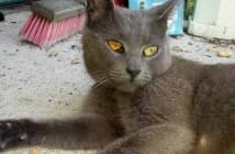 出産前の猫