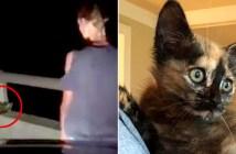 橋から助け出された子猫