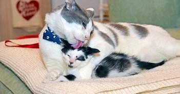 幸せそうに毛づくろいする猫