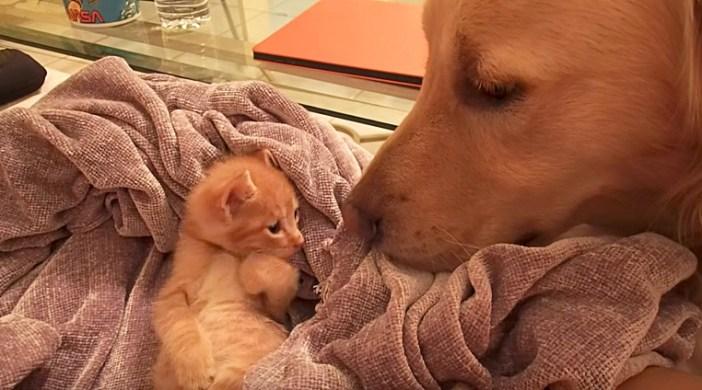 犬が気になる子猫