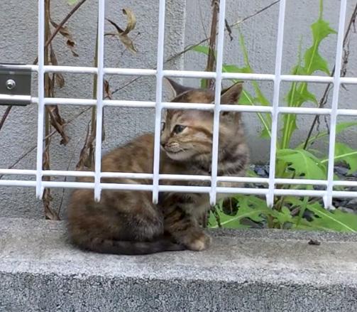 自宅近くの子猫