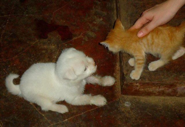犬と猫の兄弟