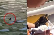 ボートに助けられた子猫