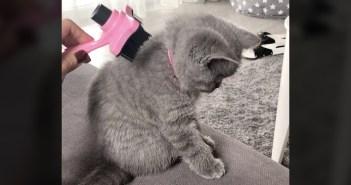 背中をブラッシングされる子猫