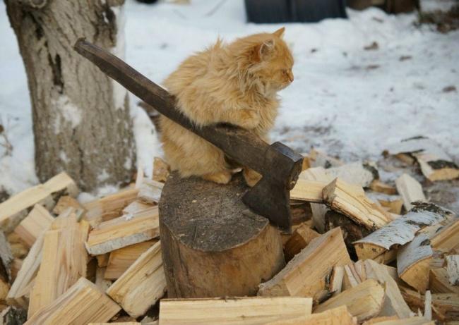 斧を振る猫