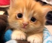 ある日突然、家を失った猫の親子。新しく迎えられた家で愛情を取り戻し、喜びの気持ちを伝えてきた! (9枚)