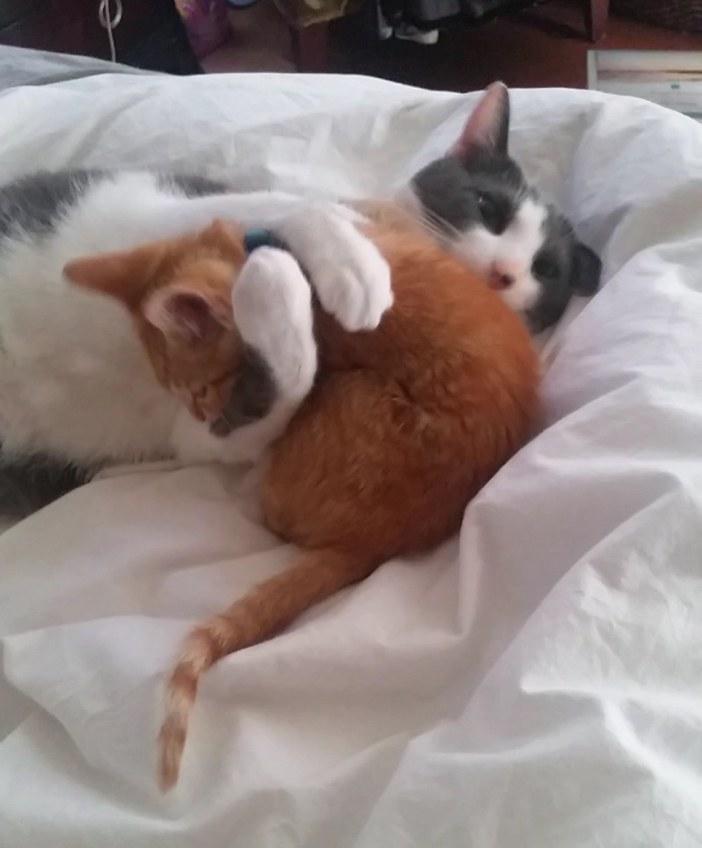 ベッドで遊ぶ子猫