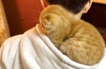 フードで眠る子猫