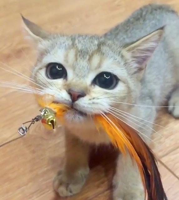 オモチャを離さない子猫