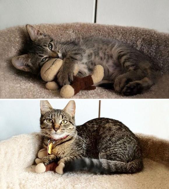 ねいぐるみ大好き猫
