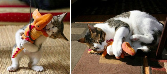 一緒に遊ぶぬいぐるみと猫