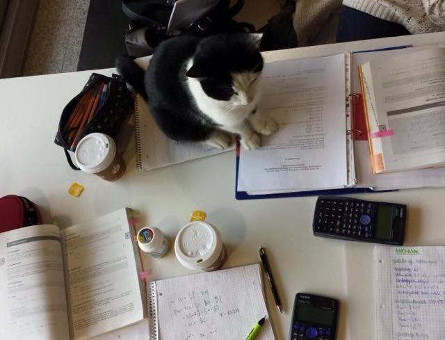 机の上の猫
