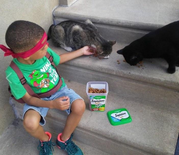 野良猫の世話をする少年