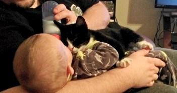 赤ちゃんを見る子猫