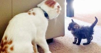 猫と子猫の出会い