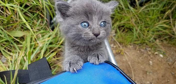 釣りの途中で保護した子猫